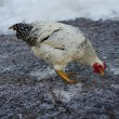 Stock Photo: Chicken