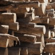 Tree trunks stacked, close up — Stock Photo #20141709