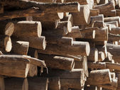 Tree trunks stacked, close up — Stock Photo