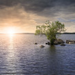 Lone tree on the lake — Stock Photo