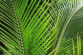 Palm Leaf in the Jungle — Stock Photo