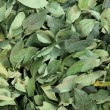Coca Leafs — Stock Photo