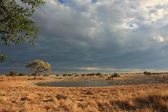 The Okaukuejo Waterhole in Etosha — Stock Photo