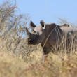 Rhino in Etosha — Stock Photo