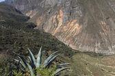 пейзаж каньон колка в перу — Стоковое фото