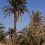 Dry Desert in the Sahara — Stock Photo