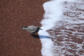 Gull on the Beach — Stock Photo