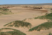 Oasis at the Desert Gobi Mongolia — 图库照片