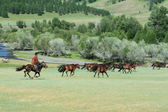 Wild Horses of Mongolia — 图库照片