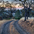 Stock Photo: Ranch Road Sunrise