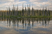 Lewis Lake Reflection — Stock Photo