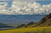 Death Valley in Bloom, Jubilee Pass — Stock Photo
