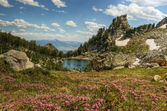 Flowering Lupine Meadows and Amphitheatre Lake, Grand Tetons — Stock Photo