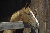 Horse in Barn — Stock Photo