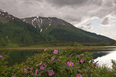 Flowers in Marsh with Snow-Capped Mountains — Stock Photo