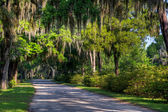 Bonaventure Cemetery, Savannah — Stock Photo