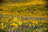 Sunflowers and Lupines — Stock Photo