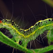 Stock Photo: Caterpillar