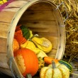 Gourds basket — Stock Photo #35502897