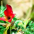 Holiday-christmas-garland-poinsetta — Stock Photo