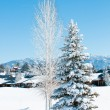 Stock Photo: Snow covered trees