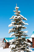 заснеженное дерево сосны — Стоковое фото