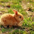 Bunny — Stock Photo #20641187