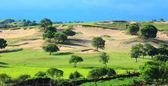 Landscape of grassland — Stock Photo
