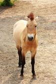 Horse — Fotografia Stock