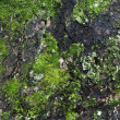 Royalty-Free Stock Photo: Green and grey moss background