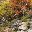 Mountain at autumn — Stock Photo