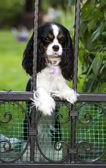 Dog waiting — Stock Photo
