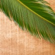 Leaf of palm tree — Stock Photo #34683733