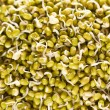 Mung beans sprouts — Stock Photo #43407897