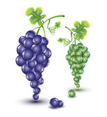 Dark and bright grapes — Stock Vector