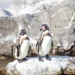 Two little penguins — Stock Photo #40515013