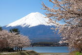 Mountain Fuji in spring ,Cherry blossom Sakura — Стоковое фото