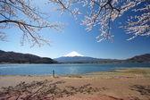 Mountain Fuji in spring ,Cherry blossom Sakura — Stockfoto