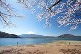 Mountain Fuji in spring ,Cherry blossom Sakura — ストック写真