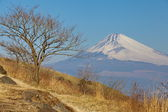 Mountain Fuji in winter season from Izu Kanagawa prefecture Japan — Stock Photo