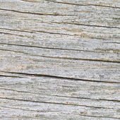 Texture of wood background — Stockfoto