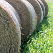 Stock Photo: Hay in countryside