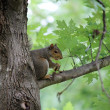 Squirrel on tree — Stock fotografie #37644283