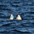 Stock Photo: Buoy on lake