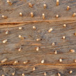 Stock Photo: Wood as background