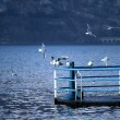 Stock Photo: Seagull on lake