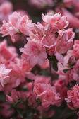 Flower in bloom — Stock Photo