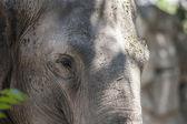 Hayvanat bahçesinde fil — Stok fotoğraf