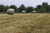 Bales of hay in the field — Stock Photo
