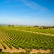 Napa Valley Vineyard — 图库照片